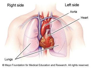 heart secret, Human Body